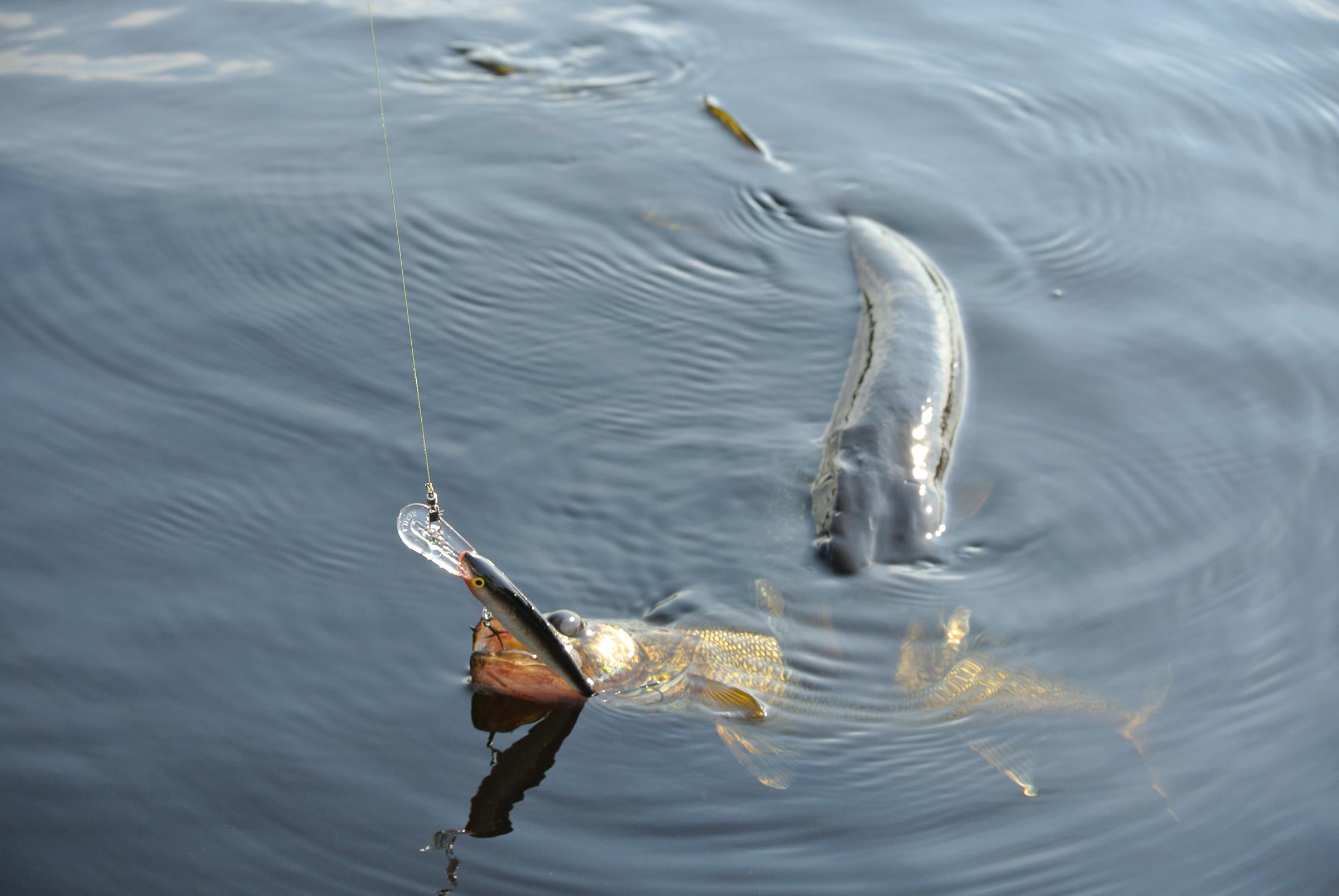 Bwca this happen much to anyone else boundary waters for Boundary waters fishing