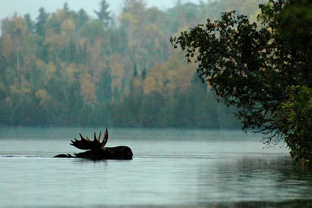 Bearskin Lodge Boundary Waters Lodging Gunflint Trail