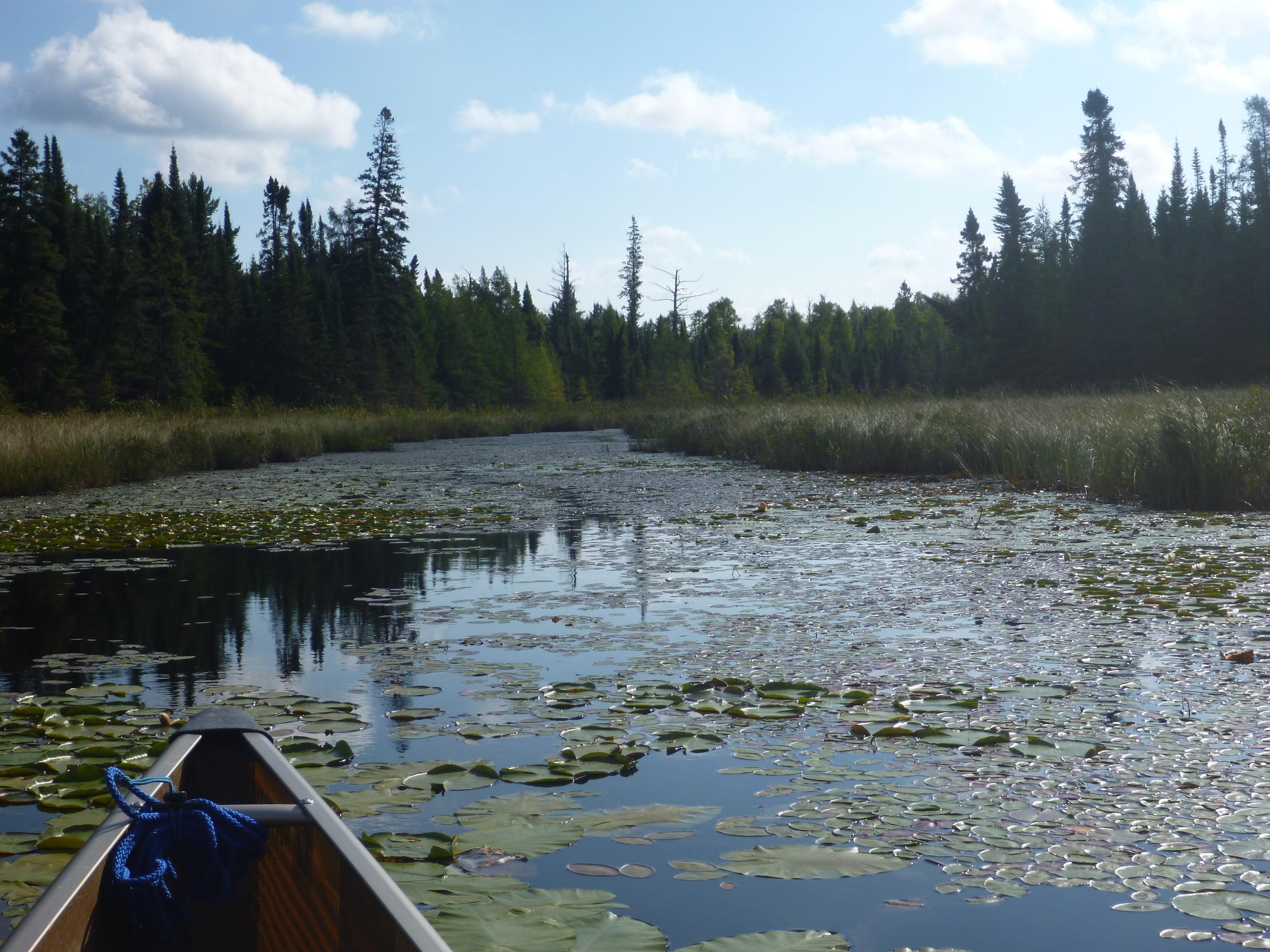 Bwca lets funk it up slideshow seagull lake opener may for Boundary waters fishing