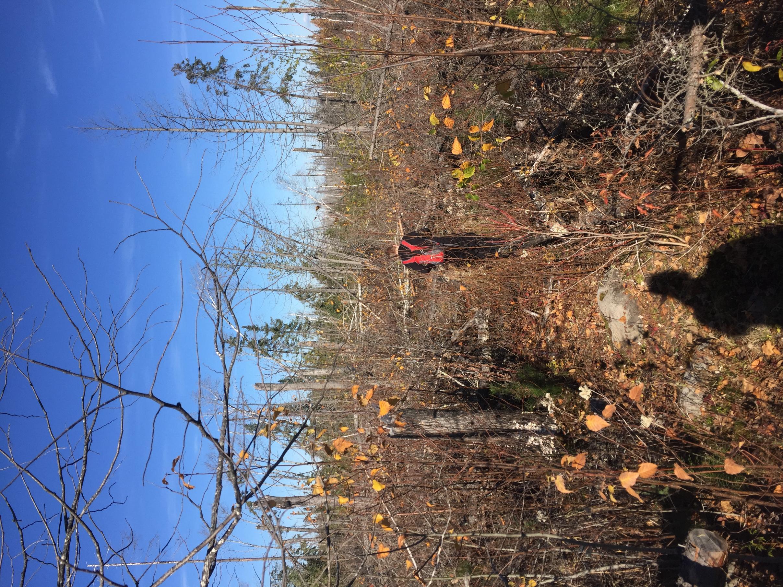 Powwow trail
