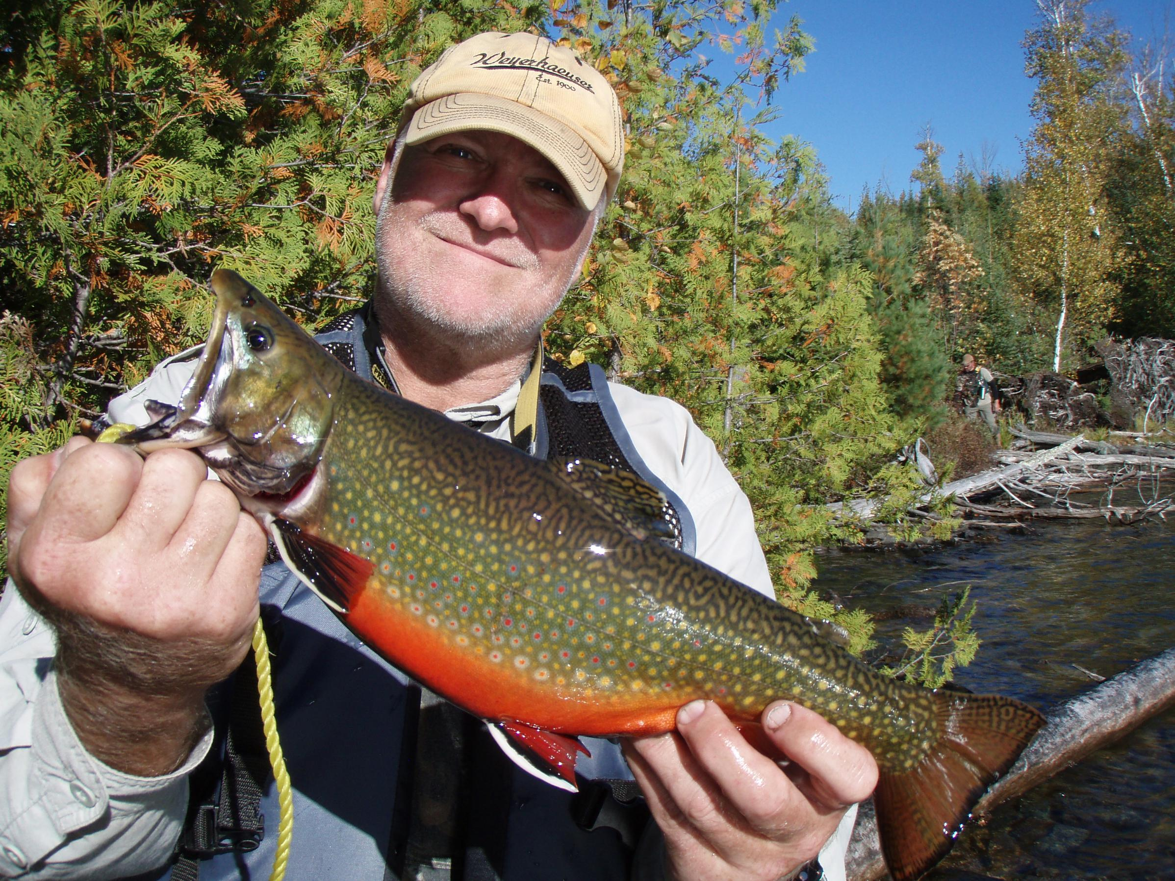 Bwca brook trout boundary waters fishing forum for Boundary waters fishing