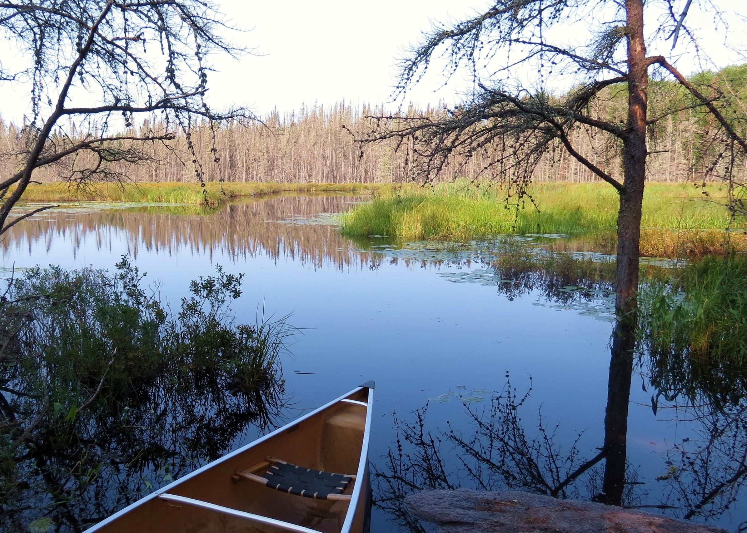 a. Beaver Pond on Moose River