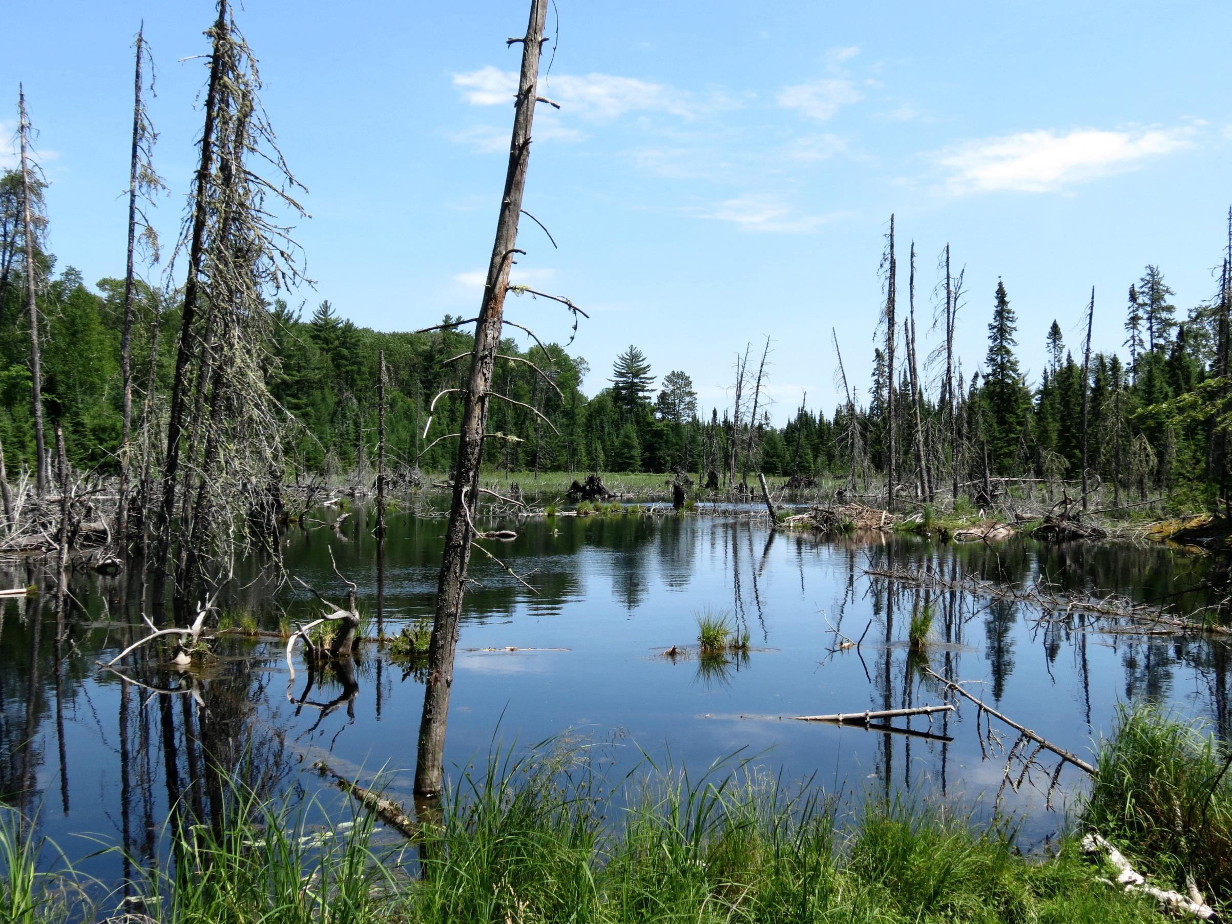 zc. Beaver pond along Ruby/Lynx portage