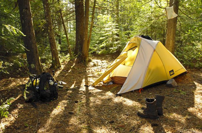 Under better circumstances McIntyre Lake cedar grove. & Thread
