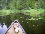 A brief chance to paddle a small pond along waterway connecting That Man and Magie Lakes.