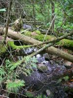 Obstructions and deadfall increase after second pond.