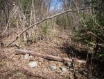 Timber across side trail leading to unmaintained east loop of old Pow Wow Trail.