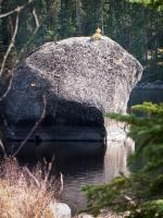 Boulder with sapling in South Wilder Lake.