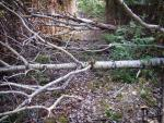 The trail is frequently blocked by deadfall, especially along north and west sections of loop.