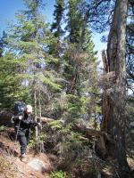 Heidi makes it over fallen half of large white pine blocking trail at Path Lake.