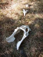 Animal (deer?) bones strewn near campsite on Quadga Lake.