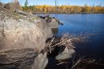 Resident beaver stocks up for the coming winter along northeast shoreline of island campsite on Gabbro Lake.