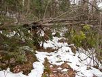 Tree Blockage, Oyster to Rocky Portage