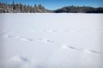 Covered animal tracks on snowy Shell Lake.