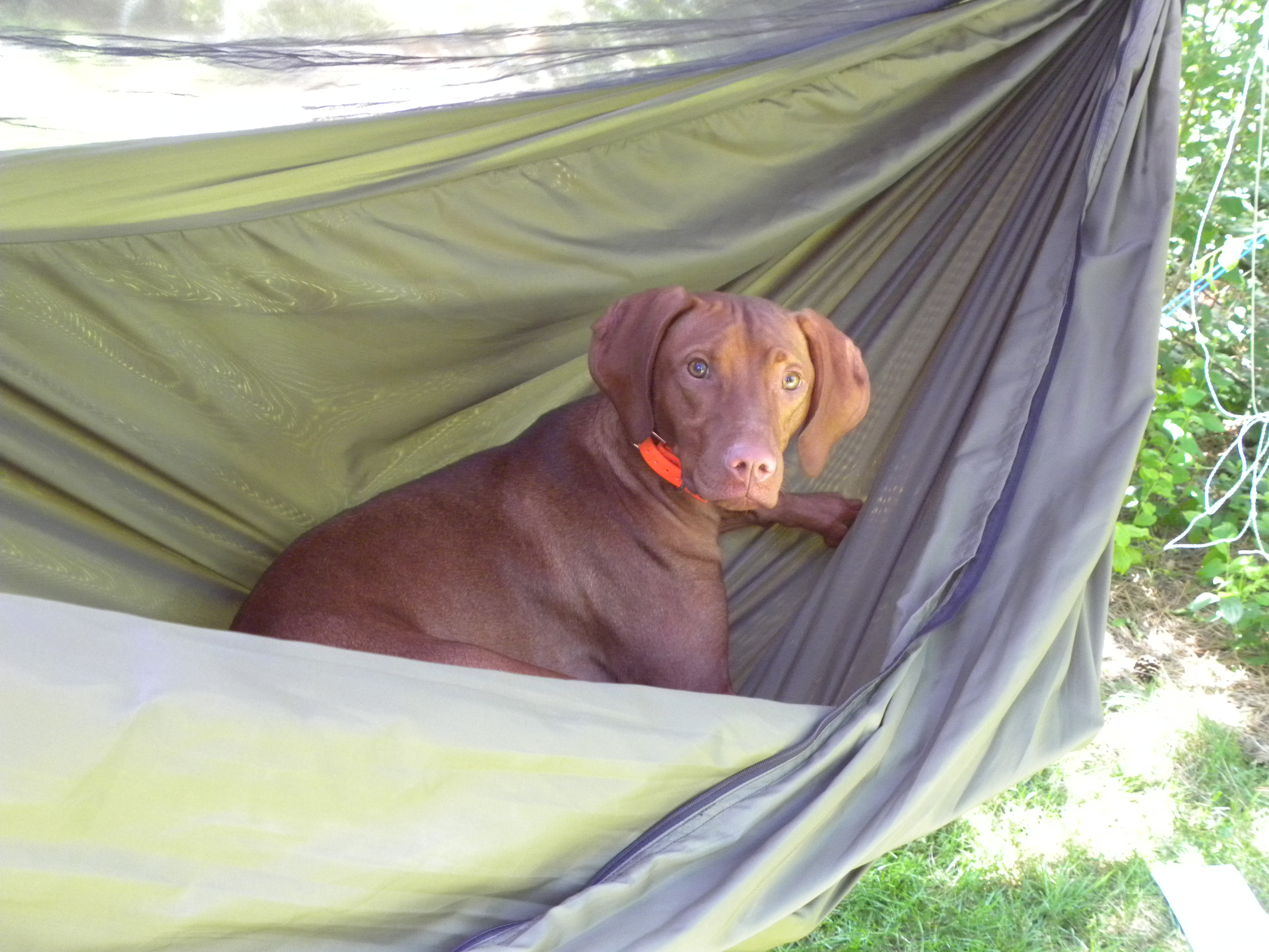 to tag dog archives free hammock img how falling a fernweh for girl and hammocks her camp