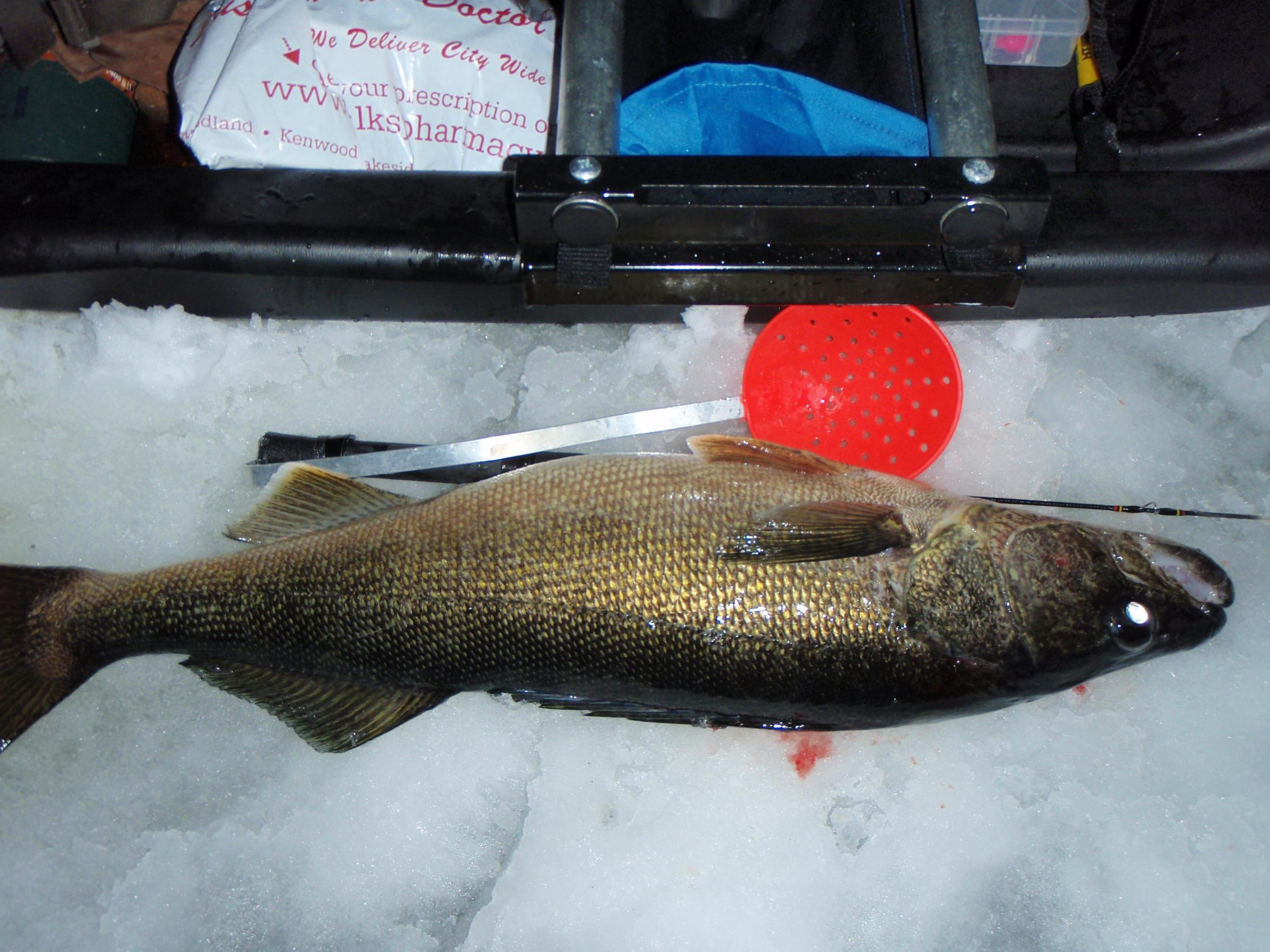 Bwca how many walleye over 10 pounds boundary waters fishing forum nvjuhfo Images