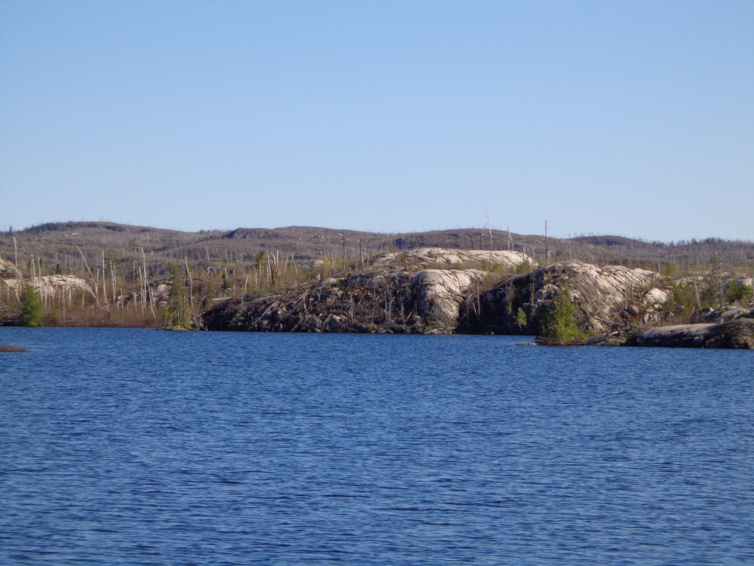 seagull shoreline