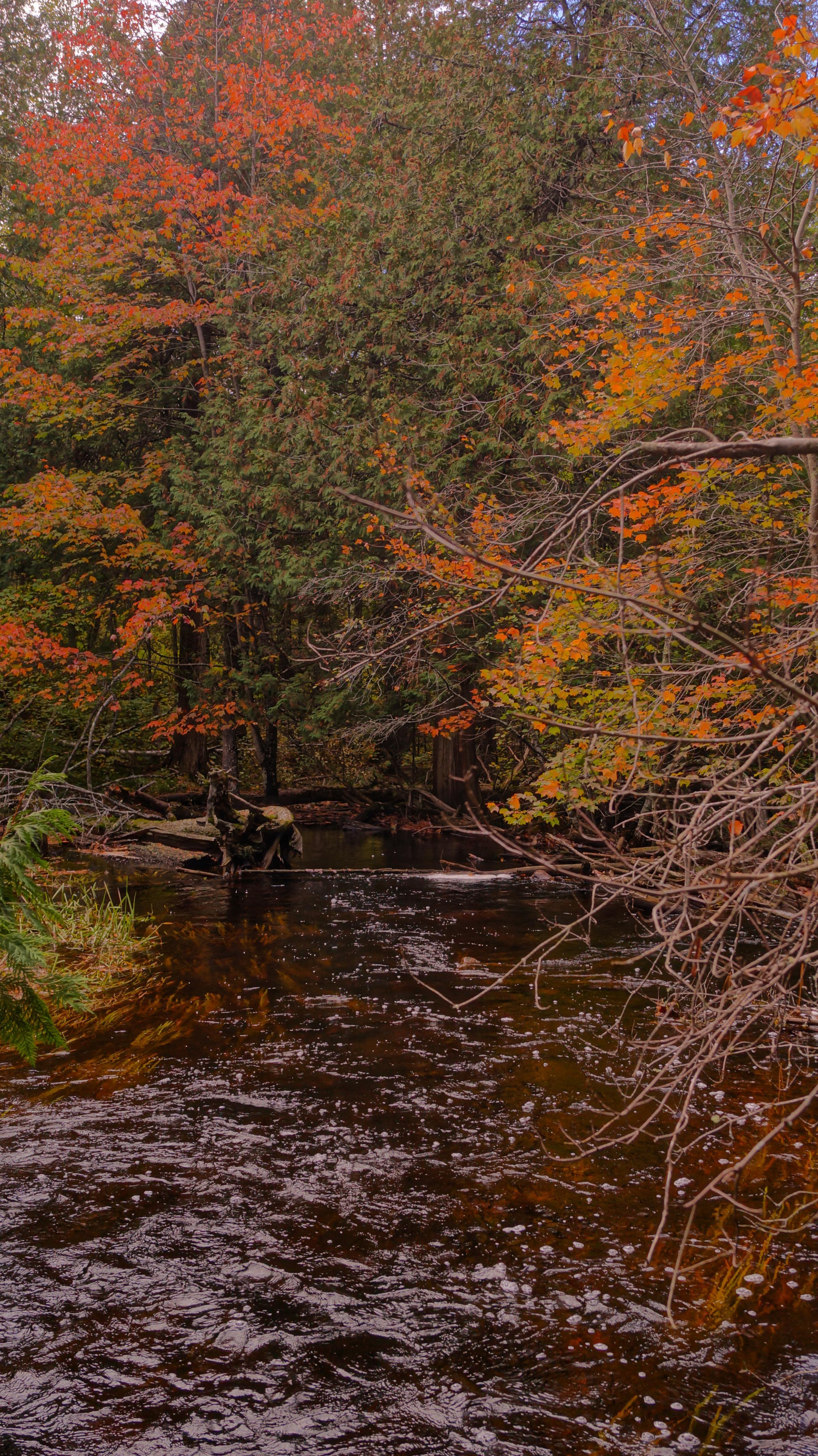Meandering Autumn Stream