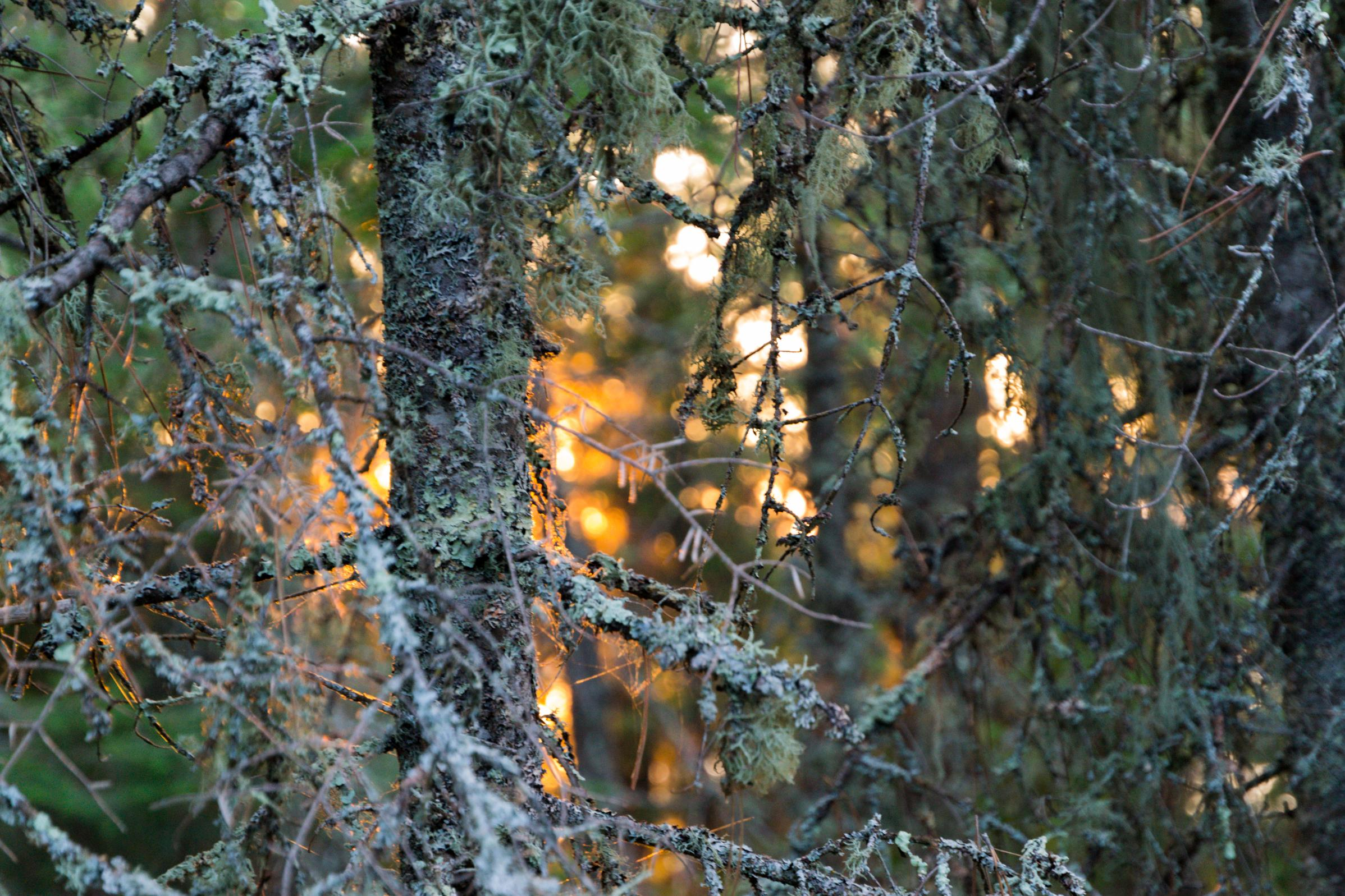 Sunset through the trees on Insula