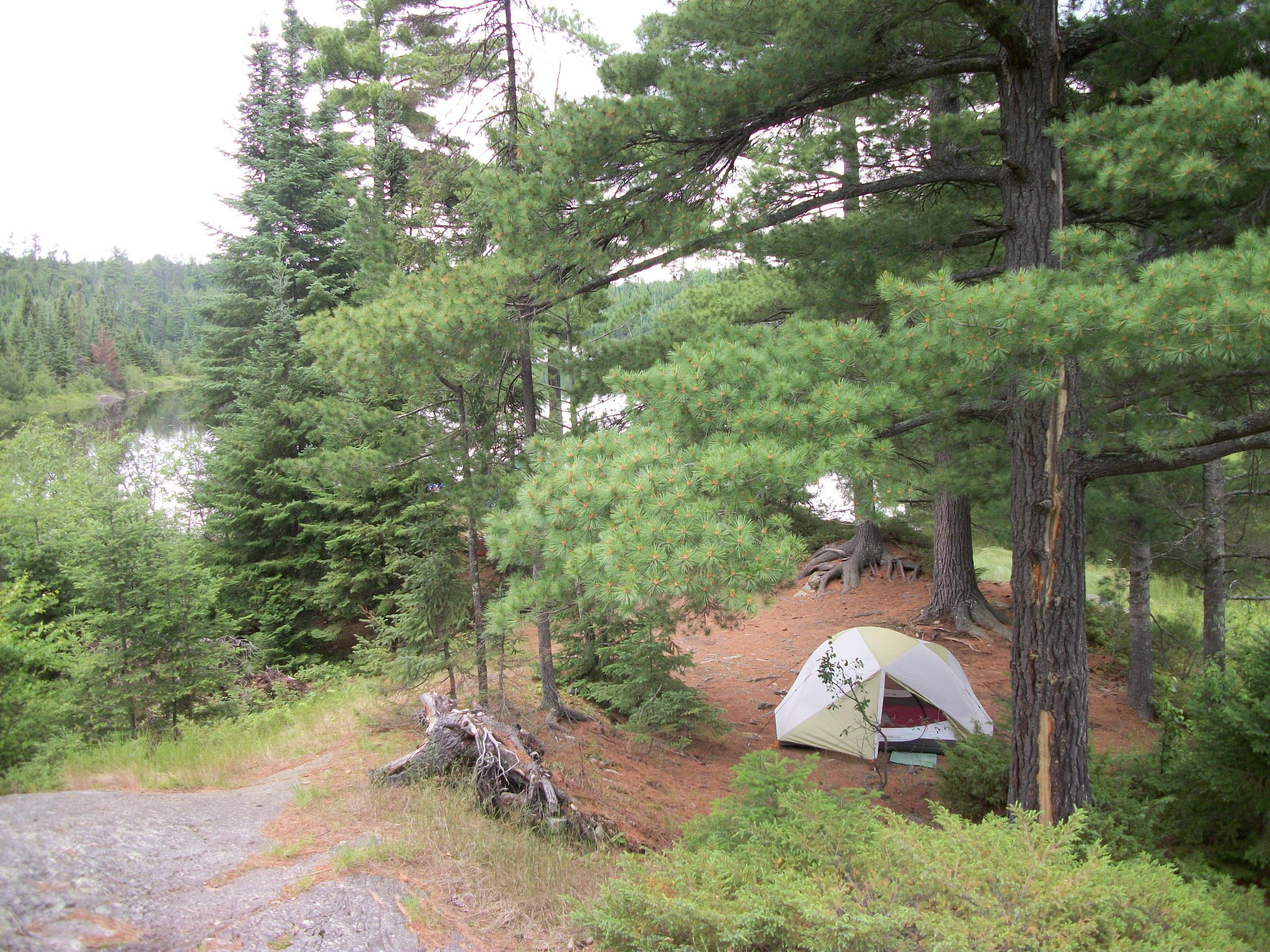 Under the White Pine
