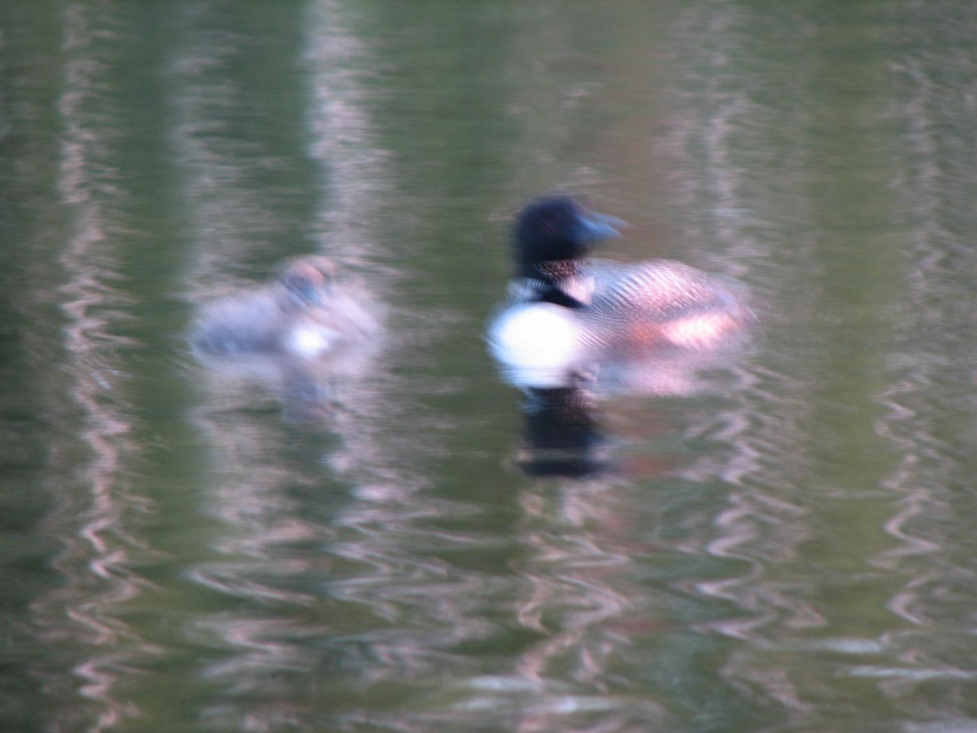 S. Loons (impressionist)
