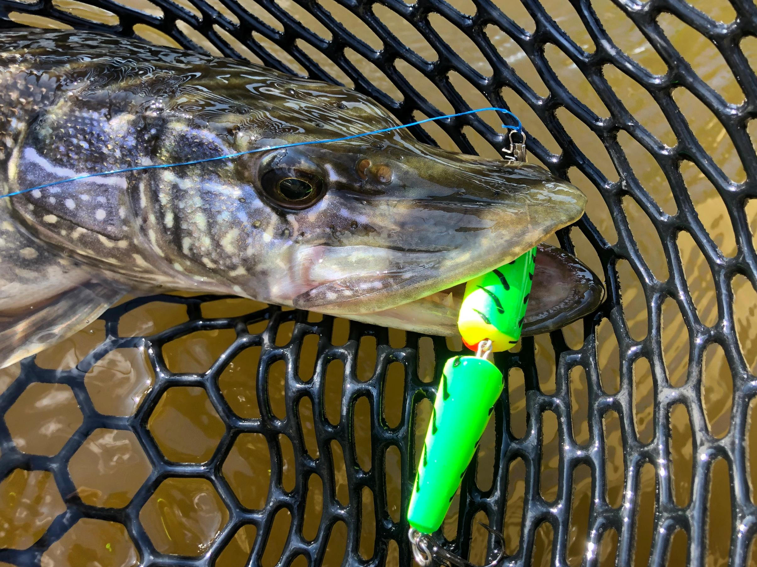 BWCA Crushed lure pics -- let's see em! Boundary Waters Fishing Forum