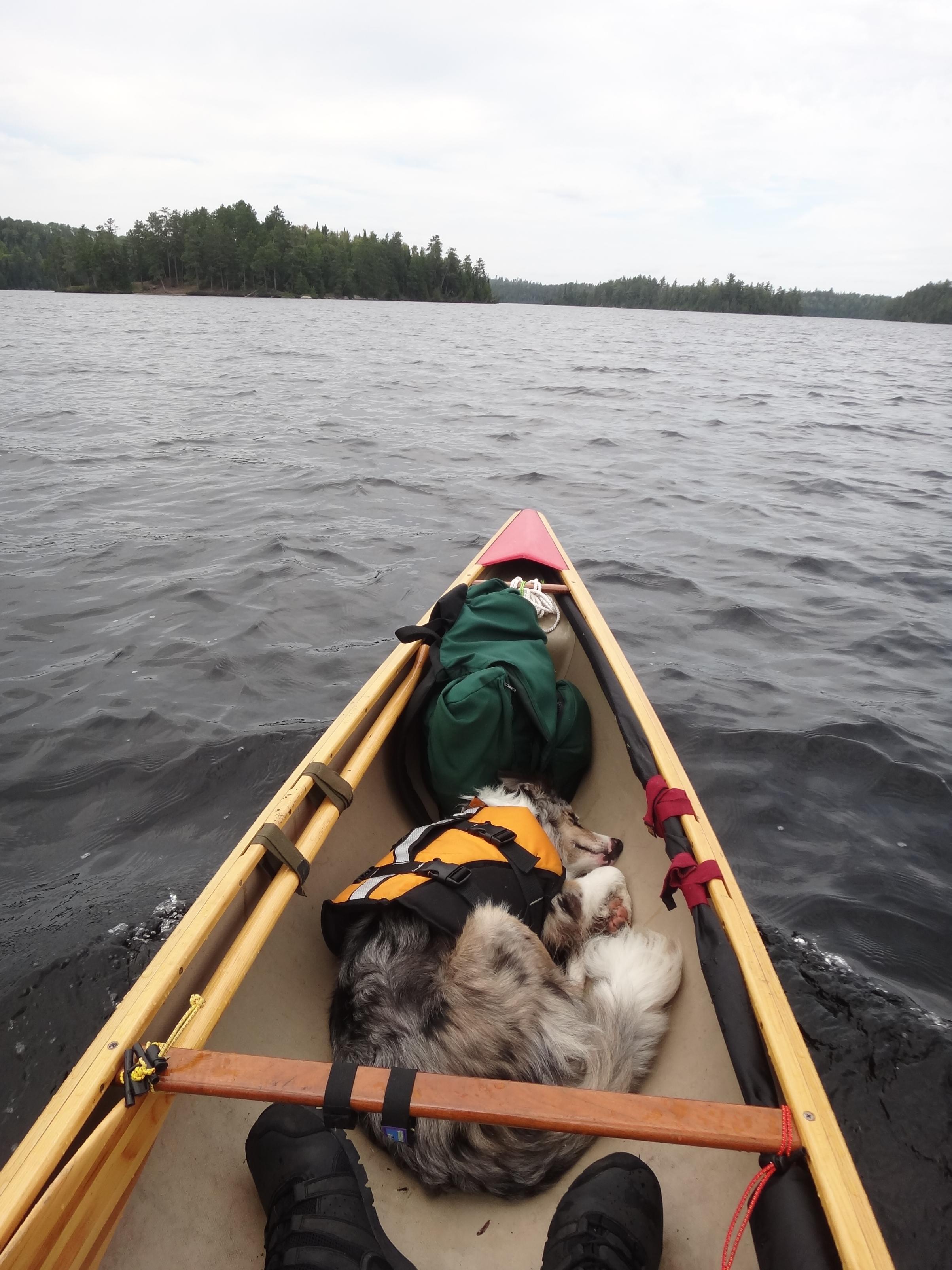 BWCA Solo Canoe w/ Dog Boundary Waters Group Forum: Doggie