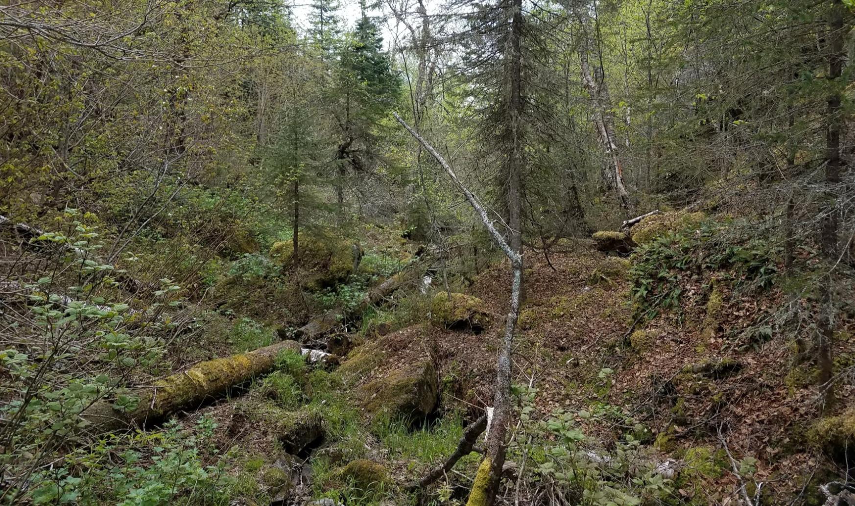 Diablo trail