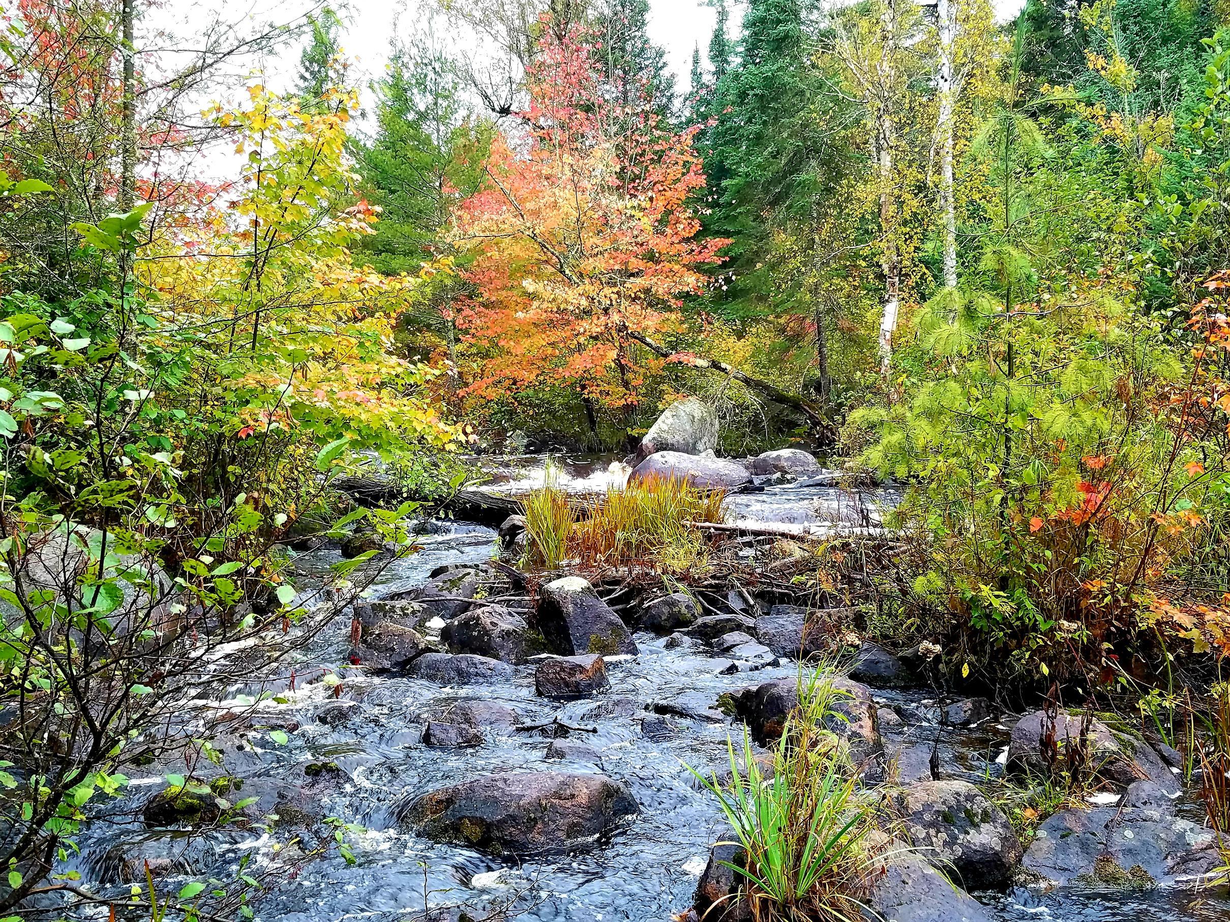 Moose River Autumn Colors
